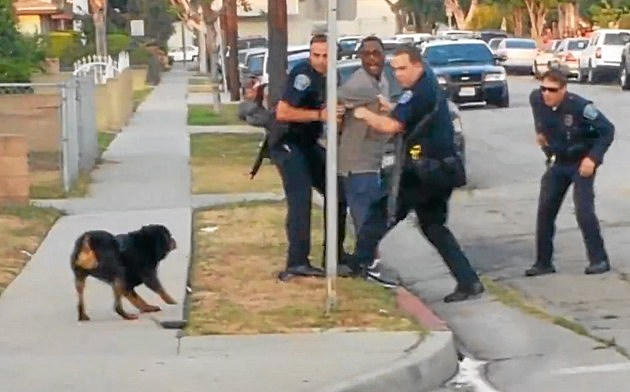 police shoot dog while owner is arrested