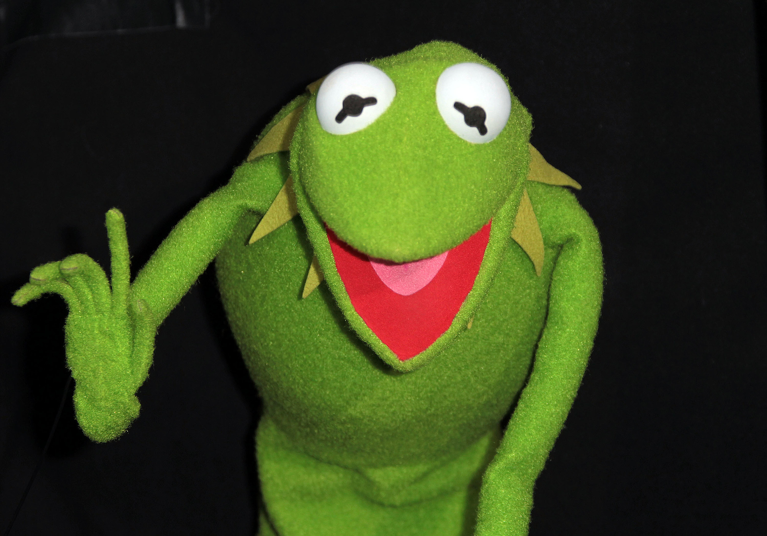 Real Life Kermit The Frog Discovered In Costa Rica - Real life kermit the frog discovered in costa rica